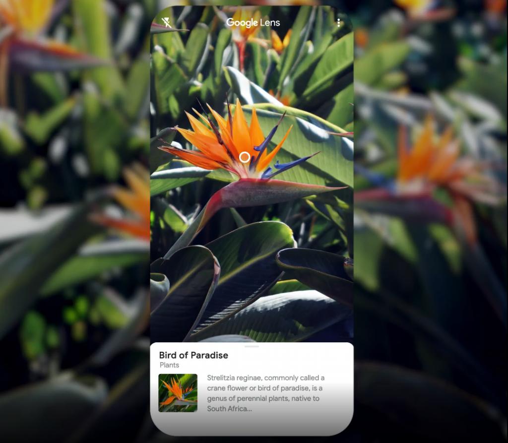 Google Lens App For PC